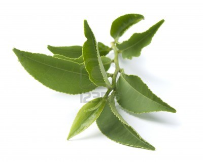 Green Tea leaves - rich in anti-oxidants