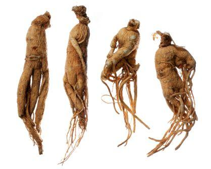 dried Ginseng roots