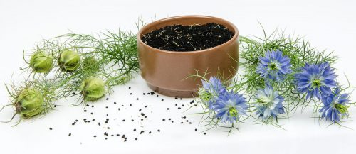 Black Seed Oil Side Effects - Are There Any? - Blending