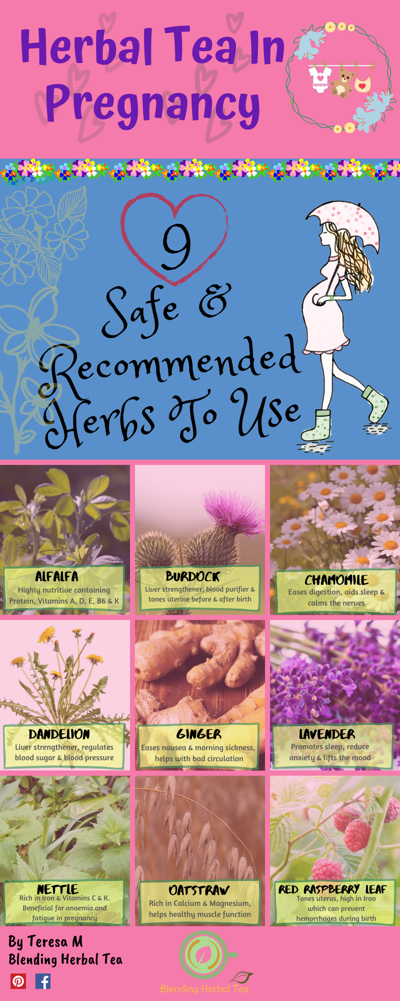 Herbal Tea In Pregnancy Infograph